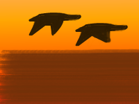 sunset_birds